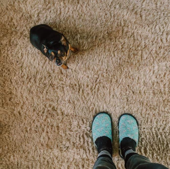 Toronto_Carpet_Cleaning_Team